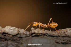 Inilah Keistimewaan Semut dan Beberapa Teladan Yang Baik