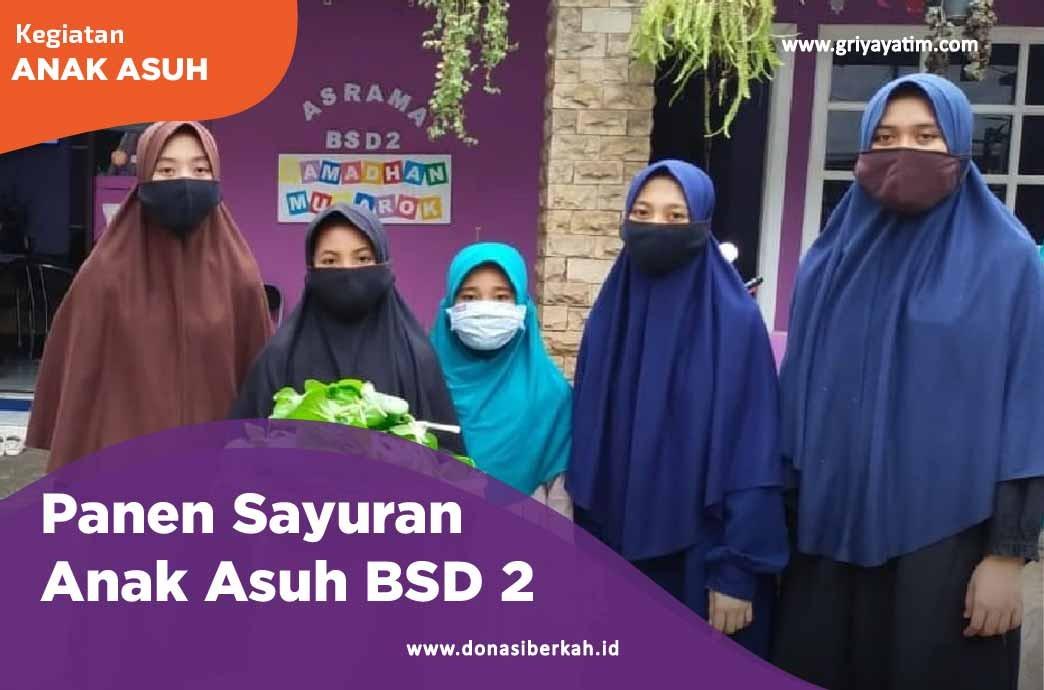 Panen Sayuran Anak Asuh BSD 2