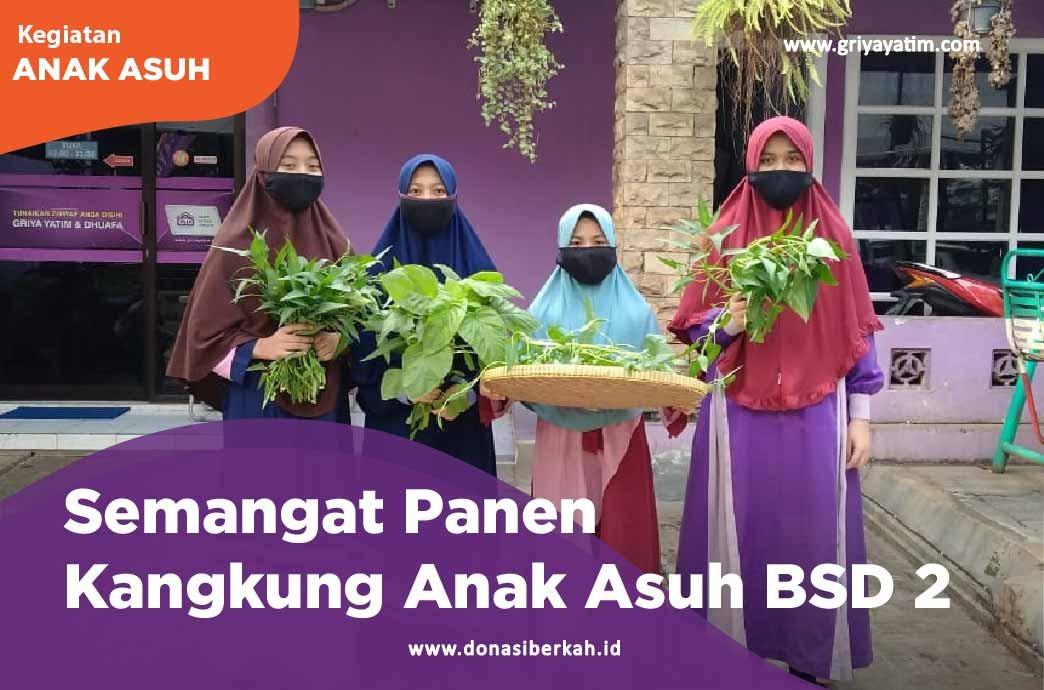 Semangat Panen Kangkung Anak Asuh BSD 2